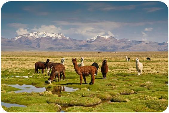 Bolivie    blog voyage