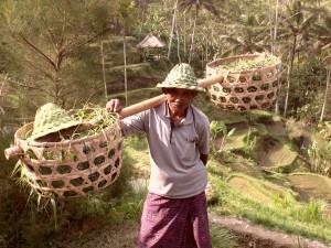 Voyageur Attitude Paysan  Bali