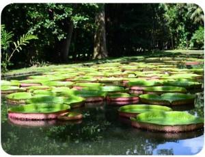 Jardin de Pamplemousses voyageur attitude