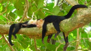 nature corcovado Costa Rica voyageur attitude