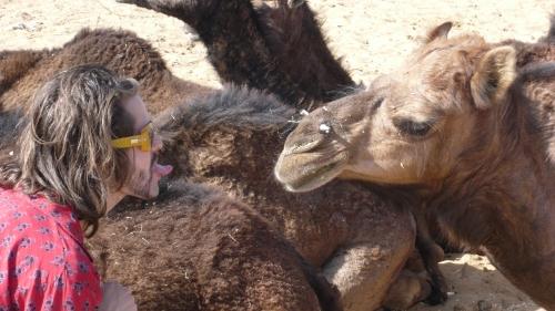 chameau pushkar inde blog voyage