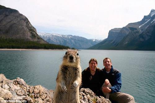 photo bombing marmotte