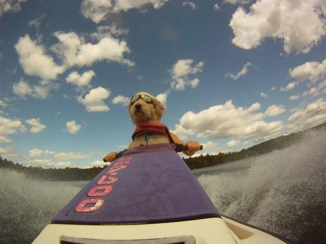 chien-jet-ski