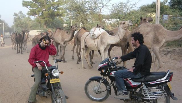 foire aux chameaux Pushkar  voyageur attitude