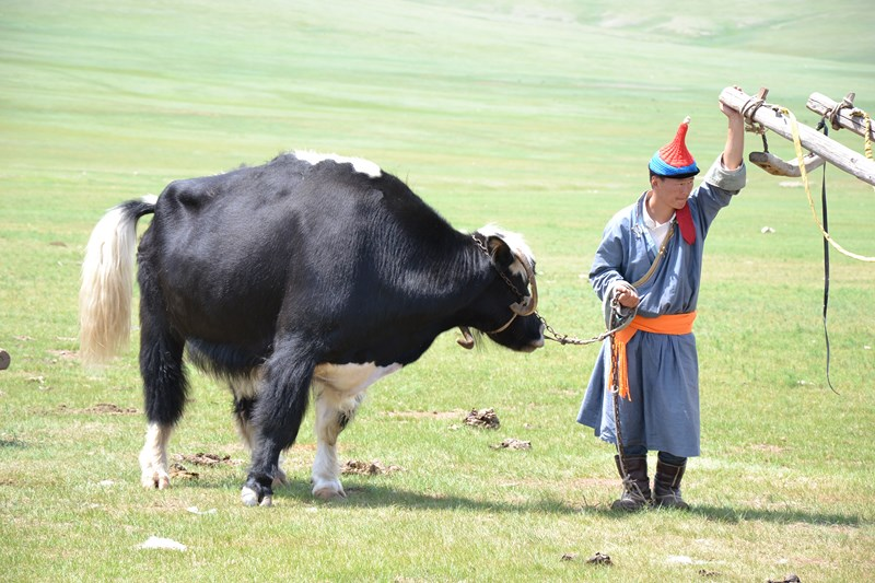 Mongolie animal atypique