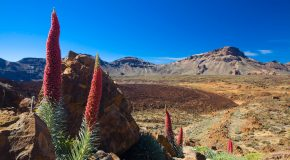 Que faire à Tenerife ?