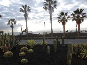 Cactus Tenerife blog voyage
