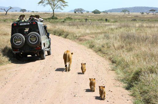 Les parcs de Tanzanie